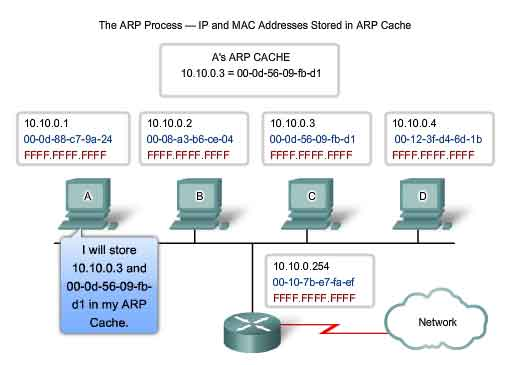 ARP process IP and MAC address stored in ARP cache